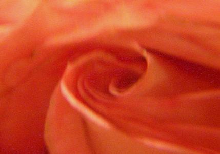 rose-verzerrt_765x300